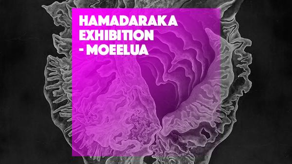 hamadaraka_hp_1